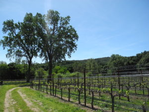 paso robles wine tours in the central california wine region: call Edith today at (805) 464-6225